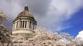 sekreter : Washington State Capital Building Olympia Springtime Cherry Blossoms Stok Video