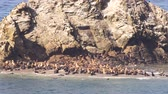Hundreds of Seals and Sea Lions Converge on the Same Isolated Sandy Beach Dostupné videozáznamy