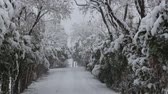 dark : snowfall on trees and snowy roads Stock Footage