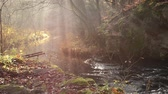 fog : waterfall in misty autumn forest at sunset, Harz National Park, Germany