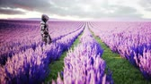 campo de batalha : Military robot, cyborg with gun in lavender field. concept of the future. Realistic 4k animation. Stock Footage