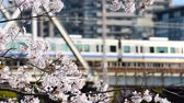 avril : Blossom cherry branch over moving trains during springtime in Tokyo, Japan