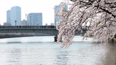 avril : blossom cherry branch over moving in Tokyo, Japan Vidéos Libres De Droits