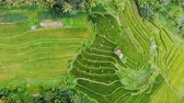 Aerial view stairs rice plantation in bali, Indonesia