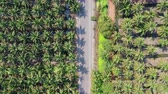 Aerial view of coconut farm in Samut sakhon province,Thailand