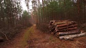 lumbering : Wooden Log Stacks for Forestry Industry along the Forest Road near Lublin, Lubelskie, Poland
