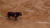 tourada : Novillada Picada on Plaza de Toros de Las Ventas – Bullfighting on Bullring in Madrid, Spain