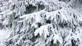 snowy forest landscape in the mountains of Winterberg, Hochsauerlandkreis, Germany, poplar and beautiful holiday location Stok Video