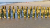 pays bas : weathered wooden poles at the beach of domburg, The Netherlands Vidéos Libres De Droits