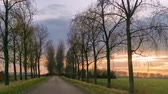 pays bas : driving on a road in the countryside or old beijerland, The Netherlands Vidéos Libres De Droits