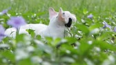 regards : Bouchent portrait de chat blanc dans le parc