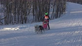 kızak : KAMCHATKA PENINSULA, RUSSIAN FAR EAST - FEB 2, 2019: Open Team Kids Championship of Petropavlovsk-Kamchatsky City in winter sports mushing disciplines - relay sled dog race competitions.