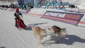 postroj : PETROPAVLOVSK KAMCHATSKY, KAMCHATKA PENINSULA, RUSSIA - FEBRUARY 21, 2019: Kamchatka Kids Competitions Dog Sled Racing Dyulin Beringia. Running dog sled young musher through stadium. Dostupné videozáznamy