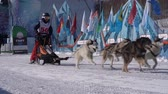 szánkó : PETROPAVLOVSK KAMCHATSKY CITY, KAMCHATKA PENINSULA, RUSSIA - FEB 21, 2019: Kamchatka Kids Competitions Sled Dog Race Dyulin Beringia. Running husky dog sled young musher through stadium. Slow motion