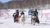 szánkó : Children mushing sled dog team, running on snowy race distance during Kamchatka Kids Competitions Dog Sled Racing Dyulin Beringia. Petropavlovsk, Kamchatka Peninsula, Russian Far East - Feb 20, 2020.