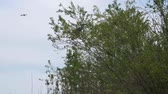 саванна : Heron sits on the top of the tree. Heron takes off from the tree branch.