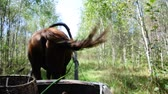 осина : travelling in a horse-cart