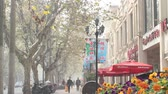 viagens de negócios : busy tree lined street in the french concession Stock Footage
