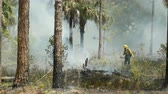 dumanlı : SEBRING, FL - APRIL 11: Florida Park Service staff use drip torches to execute a prescribed burn in the pine flatwoods of Highlands Hammock State Park on April 11, 2016 in Sebring, Florida.