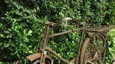 сбор винограда : 4K : Retro Vintage bike parking on a green garden, Vintage decoration concept Стоковые видеозаписи