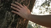 bois : Slow motion 4K Close up hand of human touching a tree trunk in the forest. Human is caring about nature and environment.Slow motion 4K Close up hand of human touching a tree trunk in the forest. Human is caring about nature and environment.