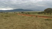 offroad : savannah landscape in kenya after raining season