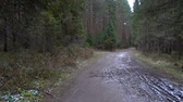 gyalogló : Video of forest frozen puddle