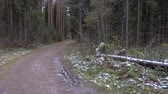 routes : Video of forest frozen mess
