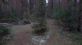 routes : Video of fir trees in the forest