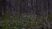 falling snow : Around view in the forest stumps