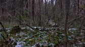falling snow : Shooting in the forest undergrowth