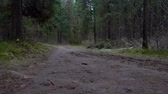 routes : Shooting of dirty road in the forest Vidéos Libres De Droits