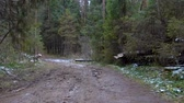 routes : Video of fallen trees in the forest