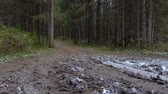 routes : Video of pine fallen trees in the forest