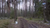 routes : Video of frozen dirty pathway in the forest