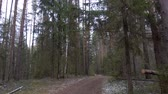 routes : Ffrozen dirty trail in the pine forest