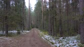 routes : Frozen dirty road in the pine forest