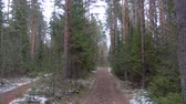 routes : Frozen muddy road in the pine forest