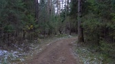 routes : Shooting of frozen muddy road in the fir forest Vidéos Libres De Droits