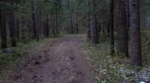 routes : Video of frozen muddy road in the fir forest