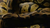 Pattern of pythons snakeskin