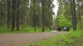 hiking trail : Horse carriage in the summer forest Stock Footage