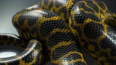 eunectes : Closeup shooting of crawling yellow boa anaconda Stock Footage