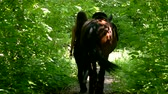 eyer : Back view young woman walk with horse in the forest