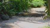 plazit se : Komodo Dragon, the largest lizard in the world