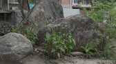 vertical growth : Stones, dirt and fallen leaves in the park. Natural landscape in Asia.