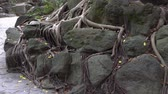 vertical growth : Roots, stones, dirt and fallen leaves in the park. Natural landscape in Asia.