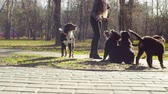 nazik : Woman playing with bernese shepherd dog puppies