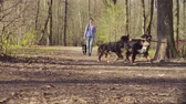 cabeludo : Woman walking with bernese shepherd dog puppies