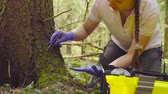 petrischale : Scientist ecologist in the forest taking samples of plants Stock Footage